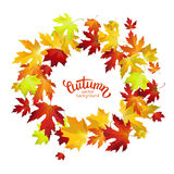 Vector background with colorful autumn leaves, banner, card temp. Late Stock Photo