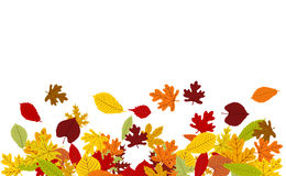 Vector background with colorful autumn leaves border. On white Royalty Free Stock Images