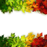 Vector background with colorful autumn leaves, card, banner Royalty Free Stock Image