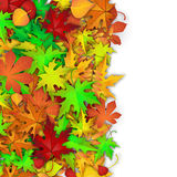 Vector background with colorful autumn leaves. Autumn card template, banner advertising vector illustration with colorful autumn leaves and white banner for your Royalty Free Stock Images