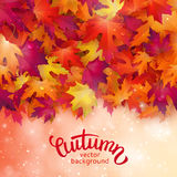 Vector background with colorful autumn leaves, card template, na. Tural backdrop Royalty Free Stock Photo