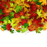 Vector background with colorful autumn leaves, card template Royalty Free Stock Photo