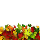 Vector background with colorful autumn leaves. Card template, natural backdrop Stock Images
