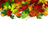 Vector background with colorful autumn leaves, card template. Natural backdrop Royalty Free Stock Photo