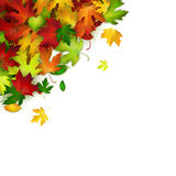 Vector background with colorful autumn leaves, card template. Natural backdrop Stock Image
