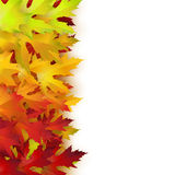 Vector background with colorful autumn leaves. Card template, natural backdrop Royalty Free Stock Images