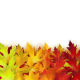Vector background with colorful autumn leaves. Card template, natural backdrop Stock Photography