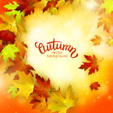 Vector background, colorful autumn leaves, card template, natural backdrop. Vector background with colorful autumn leaves, card template, natural backdrop Royalty Free Stock Photo