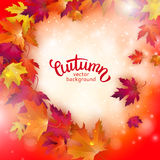 Vector background with colorful autumn leaves, card template. Natural backdrop Royalty Free Stock Photography