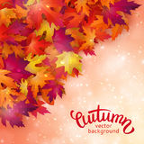 Vector background with colorful autumn leaves, card template. Natural backdrop Royalty Free Stock Image