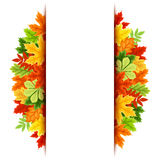 Vector background with colorful autumn leaves. Eps-10. Royalty Free Stock Images