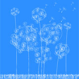 Vector background with dandelion Stock Photography