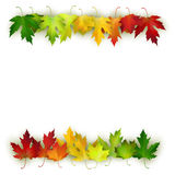 Vector background decorated with colorful autumn leaves Stock Photo