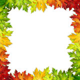 Vector background decorated with colorful autumn leaves. Card, banner Royalty Free Stock Images