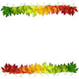 Vector background decorated with colorful autumn leaves. Card, banner Royalty Free Stock Photo