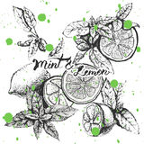 Vector background design with lemon and mint Royalty Free Stock Images