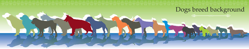 Vector background with different dogs breed. Vector background panorama with different colorful dogs breed Stock Photo