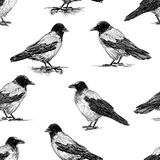 Seamless pattern of the crows sketches. Vector background of the drawn crows Royalty Free Illustration