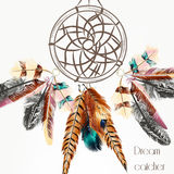 Vector background with dream catcher from colorful feathers Stock Image