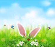 Vector background for Easter.  Rabbit ears sticking out Stock Image
