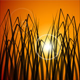 Vector background of field at sunset. Illustration Royalty Free Stock Photos