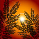 Vector background of field at sunset. Illustration, EPS 10 Royalty Free Stock Image
