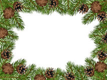 Vector background with fir branches and cones. Vector illustration of background with fir tree branches and cones on a white background Royalty Free Stock Image