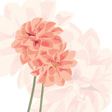 Vector background with flower Stock Images