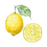 Vector background fresh limon. Stock Image