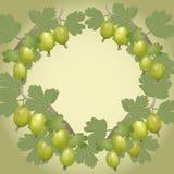 Vector background gooseberry Stock Image