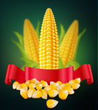 Vector background with grains and cobs of corn and red ribbon Royalty Free Stock Images