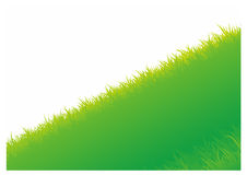 Vector background with grass Stock Image