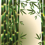 Vector background with green bamboo Royalty Free Stock Photography