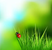 Vector background with green grass Stock Photos
