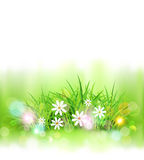 Vector background with green grass and daisies. Element for desi. Gn Stock Photography