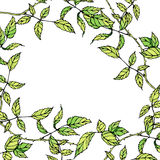 Vector background with green leaves Royalty Free Stock Image