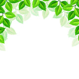 Vector background with green leaves. Royalty Free Stock Photo