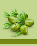 Vector background with green olives Royalty Free Stock Photos