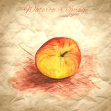 Vector background with hand drawing apple Royalty Free Stock Images