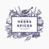 Vector background with hand drawn herbs and spices Royalty Free Stock Image