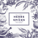 Vector background with hand drawn herbs and spices. Organic and fresh spices illustration Stock Photos