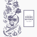 Vector background with hand drawn herbs and spices