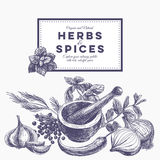 Vector background with hand drawn herbs and spices Stock Photos