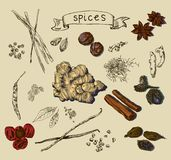 Vector background with hand drawn spices Royalty Free Stock Image