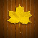 Vector background. Leaf. Autumn. Royalty Free Stock Photos