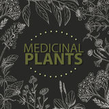 Vector background with medical herbs on a black background. Vector  illustration for your design Stock Image