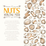 Vector background with nuts arranged vertically Stock Image