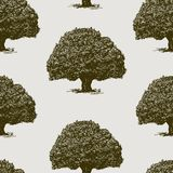 Vector background of old oaks trees stock image