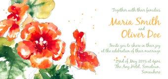 Vector background with orange watercolor nasturtium Royalty Free Stock Photo