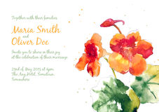 Vector background with orange watercolor nasturtium. For wedding invitation or flyer Royalty Free Stock Photo